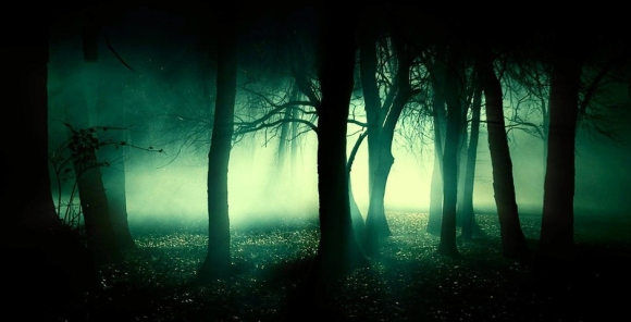 The_Woods_at_Night_Wallpaper_e67n