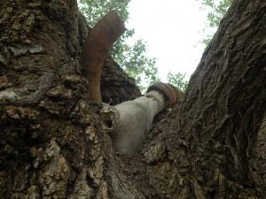 tree2bcrook